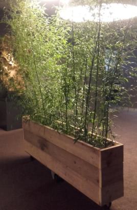 02.006 - Bamboe (6 stuks) in steigerhouten bak