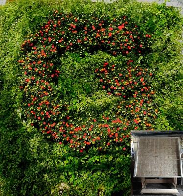 07.015 Logo plantenwand. Uw logo op een unieke manier zichtbaar bij de entree?